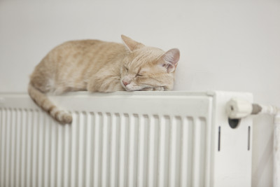 Check your heating system for a purr-fect radiator
