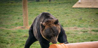 One of the bears benefitting from Polyipe's donation